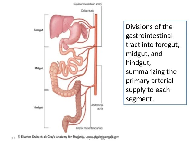 Abdominal Divisions With Abdominal System