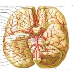 Carotid Artery Diagram Worcester Ri Boiler Wiring Blood Supply Of The Brain