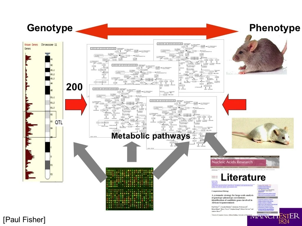 200 Genotype Phenotype Metabolic Pathways