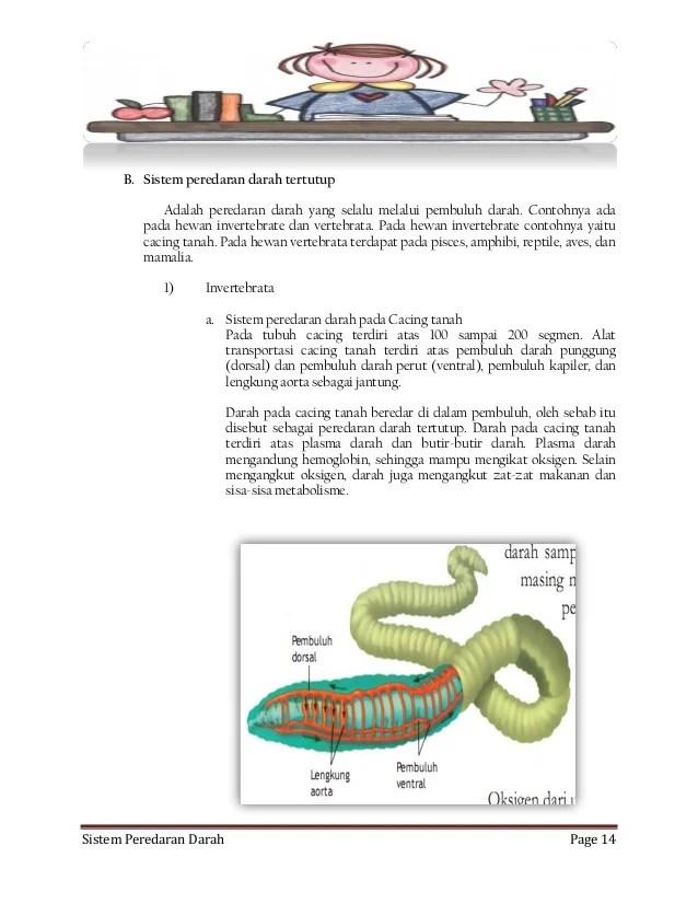 Sistem Peredaran Darah Pada Cacing : sistem, peredaran, darah, cacing, SISTEM, PEREDARAN, DARAH, MANUSIA, HEWAN
