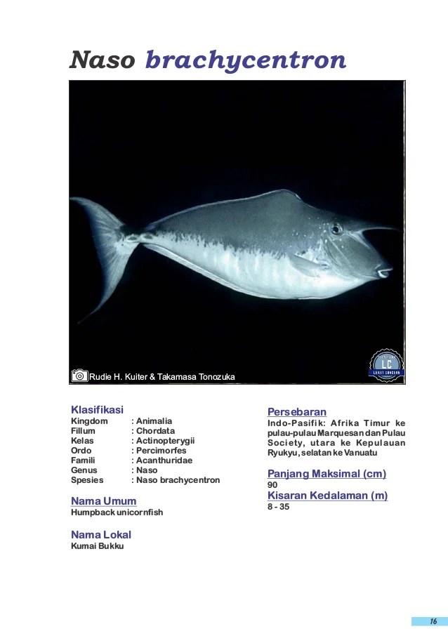 Ikan Ketang Ketang : ketang, Ketang, Laut,, Hijau, Green, Aquarium, Aquascape, Lapak, Withu, Herbal, Bukalapak, Online