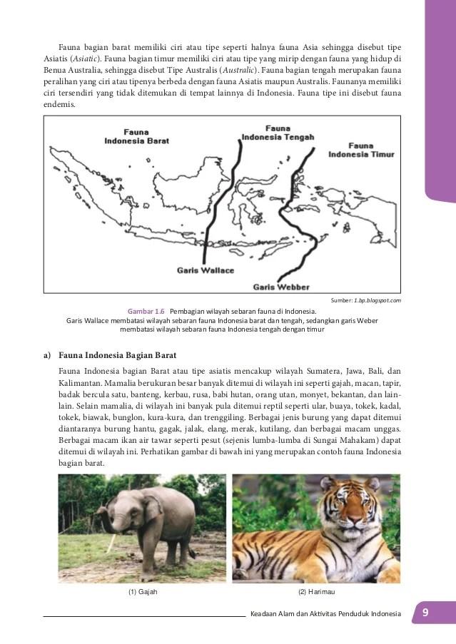 Ciri Ciri Fauna Indonesia Bagian Barat : fauna, indonesia, bagian, barat, Koleski, Terbaru, Gambar, Sketsa, Fauna, Asiatis