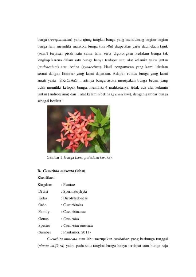 Bagian Bunga Asoka Kanan Bawah