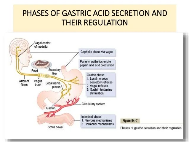 pathophysiology of peptic ulcer disease diagram e30 ignition wiring pharmacotherapy