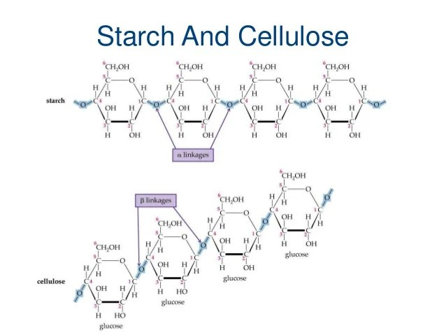 Why is cellulose important? - wehelpcheapessaydownload.web ...