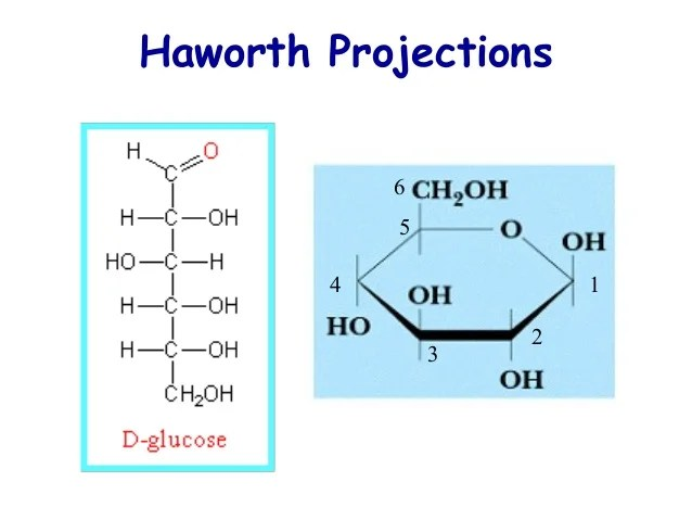 Projections Haworth D Galactose