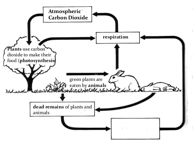 nitrogen cycle diagram worksheet answers