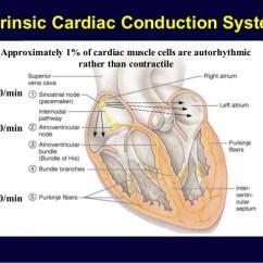 Cardiac Conduction System Diagram Bmw X5 Parts Physiology