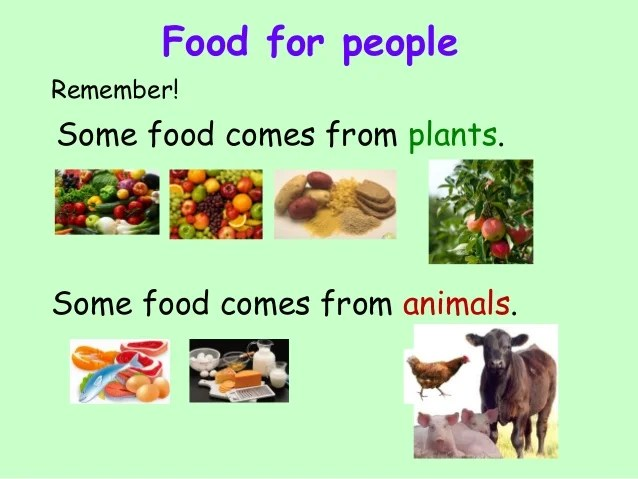 Comes Food Animals
