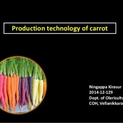 Carrot Plant Diagram Reflection And Refraction Lab Cultivation Of
