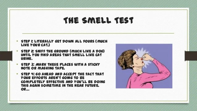 Image Result For How To Get Rid Of Dog Smell On Carpet