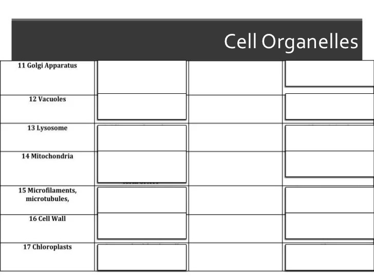 cell organelles with diagram 4
