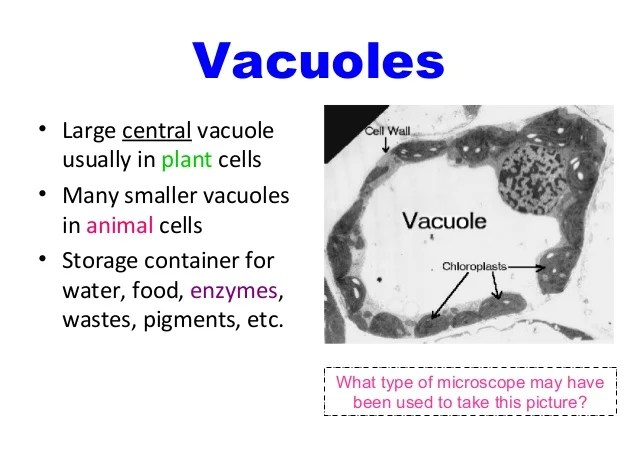 eukaryotic animal cell diagram omron temperature controller wiring anatomy and physiology organelles