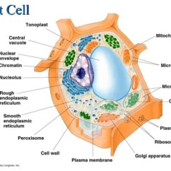 Animal Vs Plant Cell Diagram Off Grid Solar System Wiring Australia Cells Structure