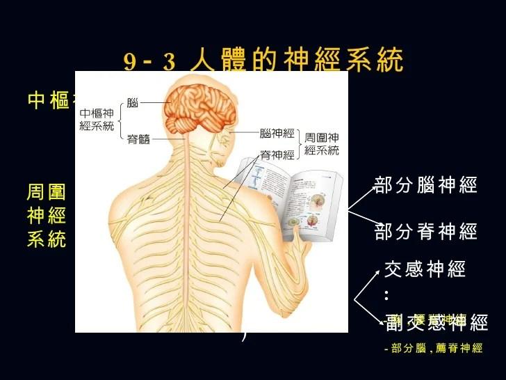 Ch9 神經系統與行為
