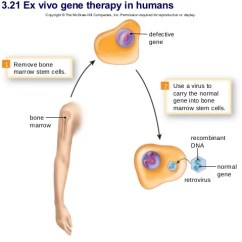 In Vivo Gene Therapy Diagram Volvo Penta Dynastart Wiring Chapter 13 Genetic Counseling 48 Figure 21 Ex
