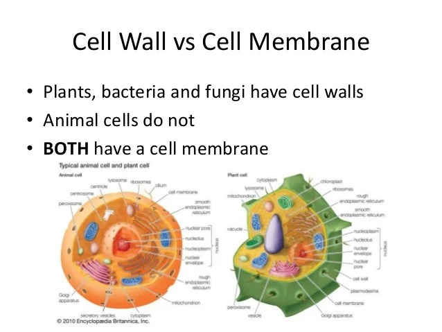 Chapter 4 cell structure