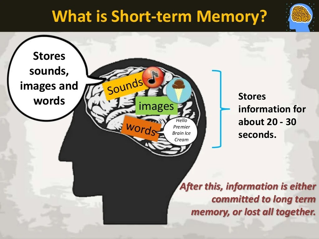Short Term Memory Characteristics The 3
