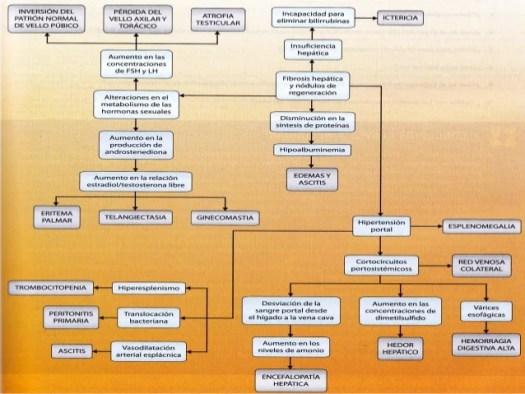 Cuidados De Enfermeria Cirrosis Hepatica