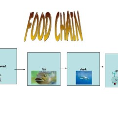 Great White Shark Food Chain Diagram 92 S10 Radio Wiring Bull Pictures To Pin On Pinterest - Pinsdaddy