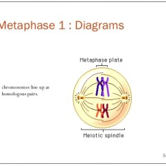 Meiosis 1 Diagram Gear Ratio Comparison Of Mitosis And 5 6 2014 Metaphase Diagrams Chromosomes Line Up As Homologous Pairs