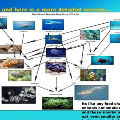 Coral Reef Food Chain Diagram Directv Genie 2 Wiring Of The Great Barrier 4