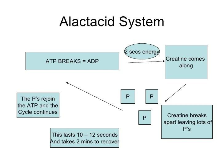 alactacid system also core factors affecting performance energy ssytems rh slideshare