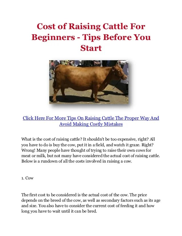 Cost of Raising Cattle For Beginners  Tips Before You Start