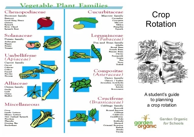 Crop rotation also teacher guide organic gardening rh slideshare