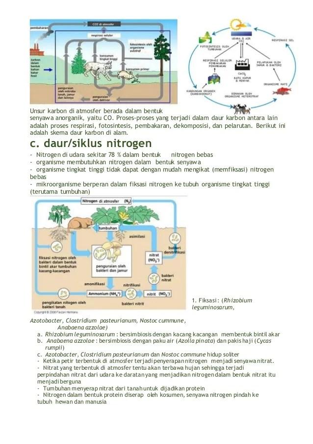 Daur Biogeokimia Nitrogen : biogeokimia, nitrogen, Biogeokimia, Ekosistem