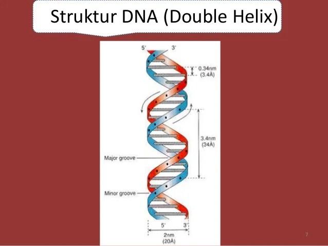 Materi Genetik DNA  RNA