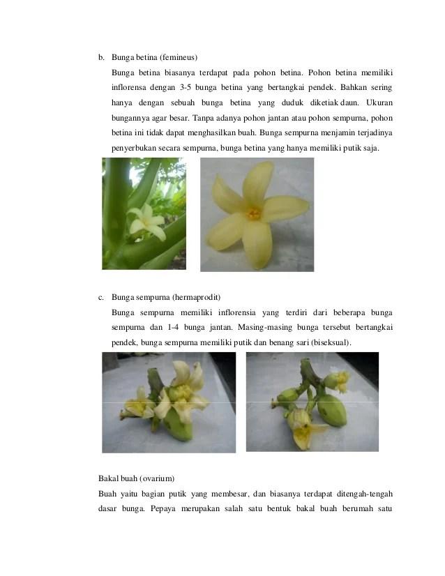 Contoh Bunga Hermafrodit : contoh, bunga, hermafrodit, Menakjubkan, Gambar, Bunga, Pepaya, Jantan, Betina