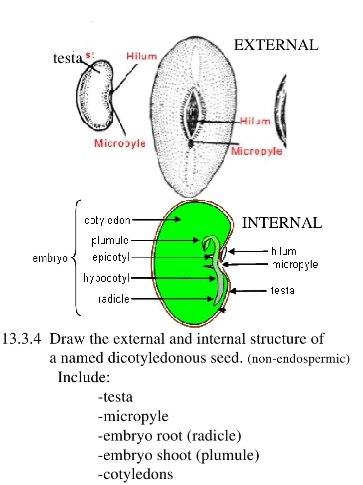 how to draw stem and leaf diagram 6 pin momentary switch wiring ib biology assessment statements