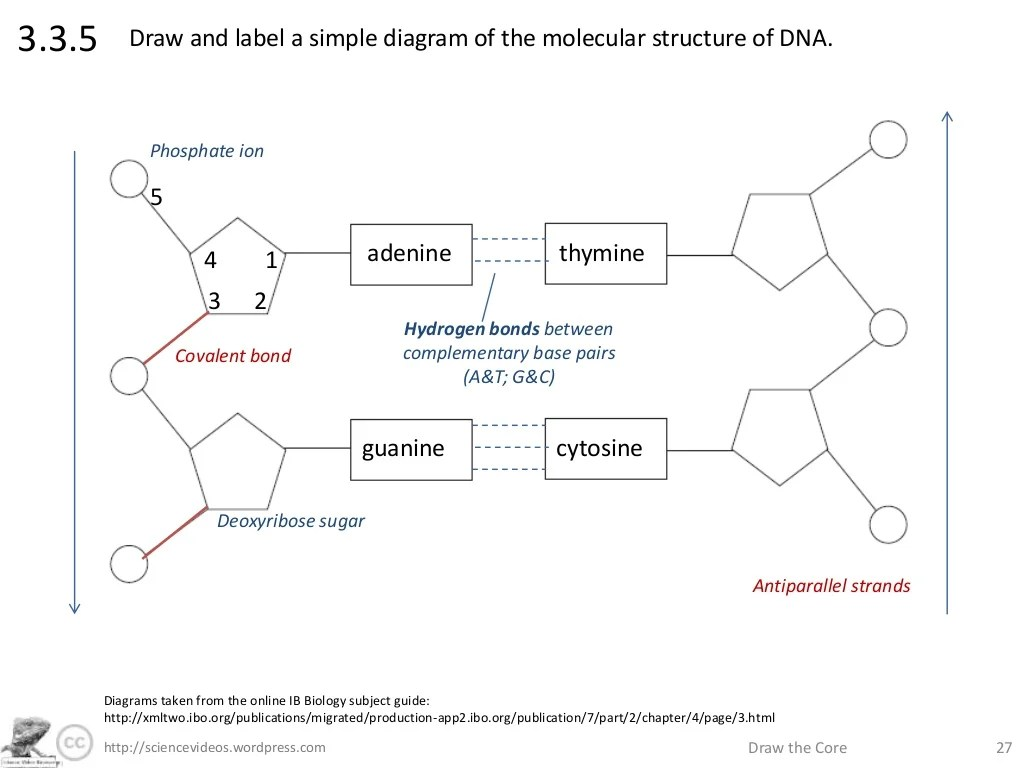 simple diagram of dna replication 1966 corvette turn signal wiring structure drawing