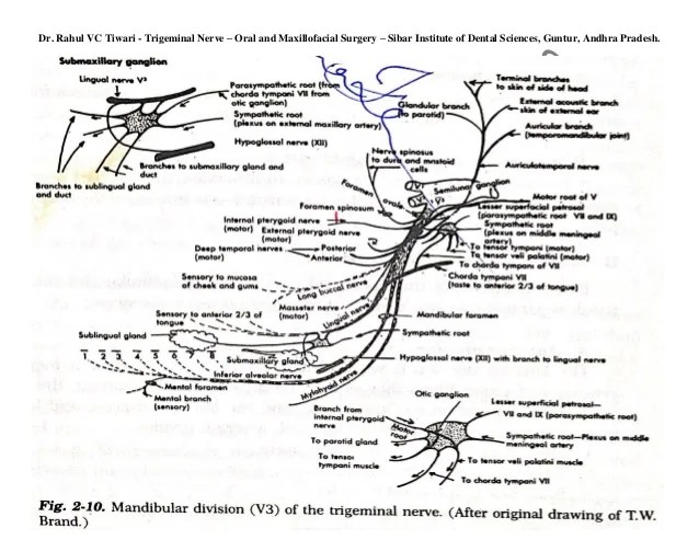 trigeminal nerve diagram sony cdx wiring dr rahulvc tiwari diagrams of intracranial and extracranial course o 8 9 rahul vc