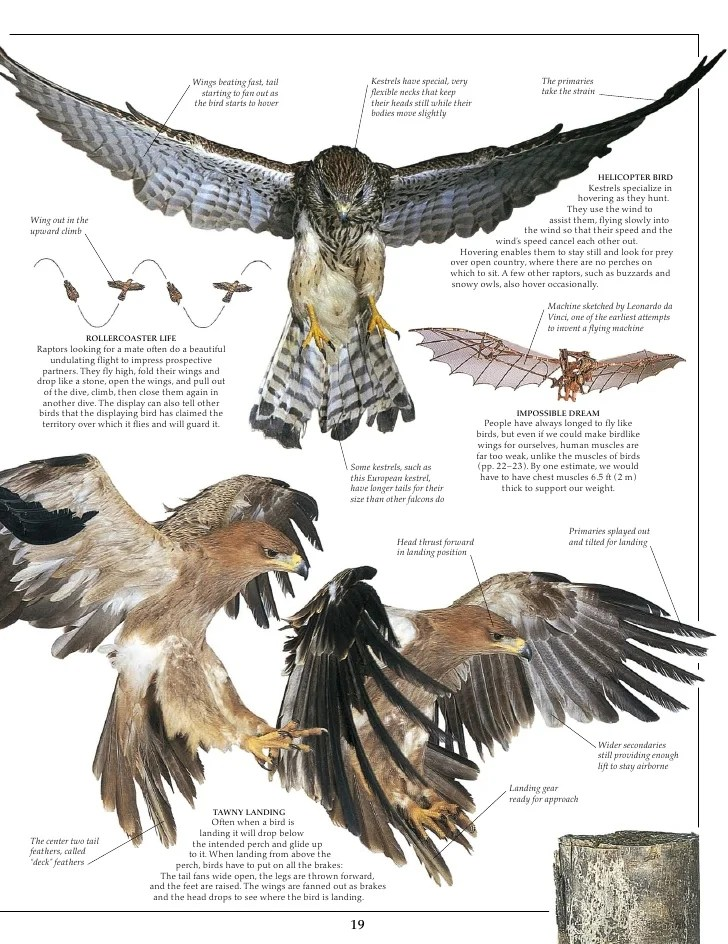 eagle anatomy diagram how to make er for a project of bald new era wiring related keywords long tail respiratory system printable pictures eagles