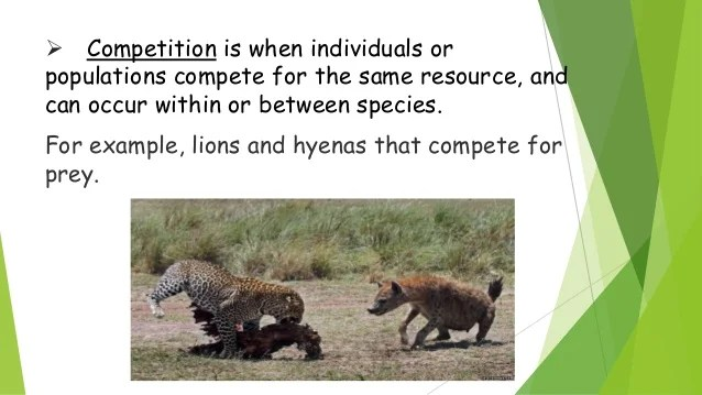 Ecological Relationship