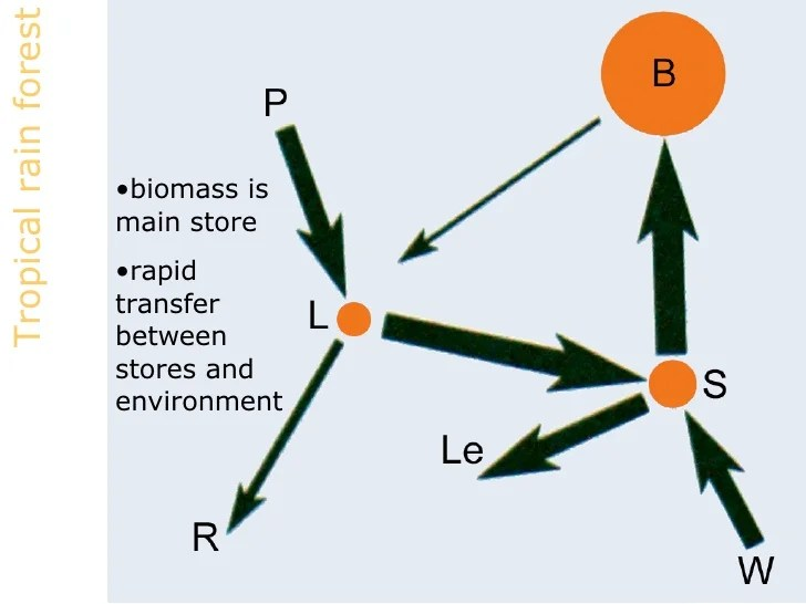diagram of a tropical forest 2002 f150 wiring ecosystems 3 nutrient cycle rain ul li biomass is main store rapid transfer between stores and environment