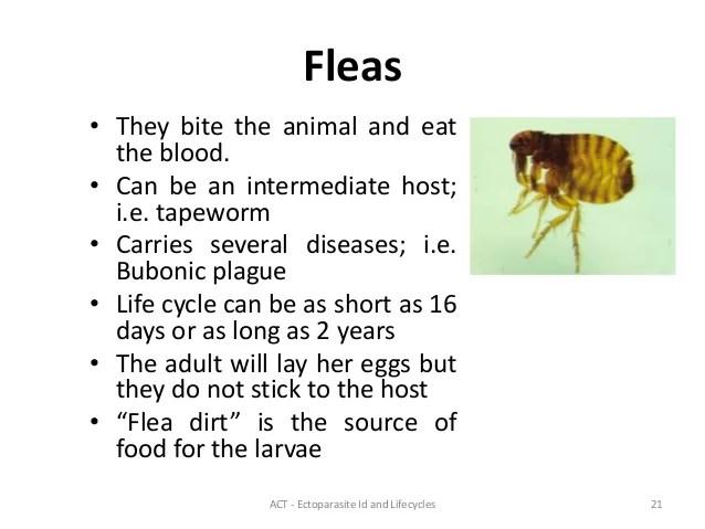 Ectoparasites