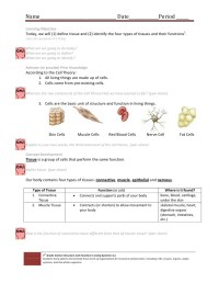 The gallery for --> Human Body Organ Systems Worksheet
