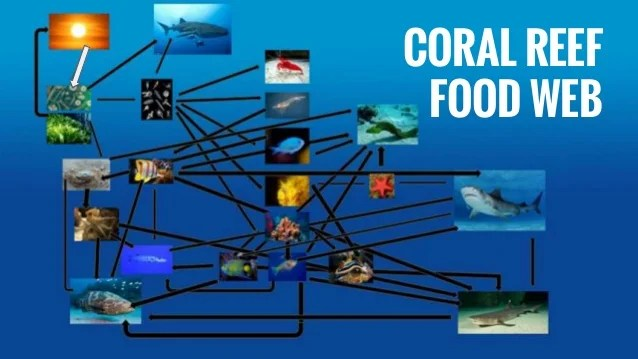 Food Coral Chain Reef