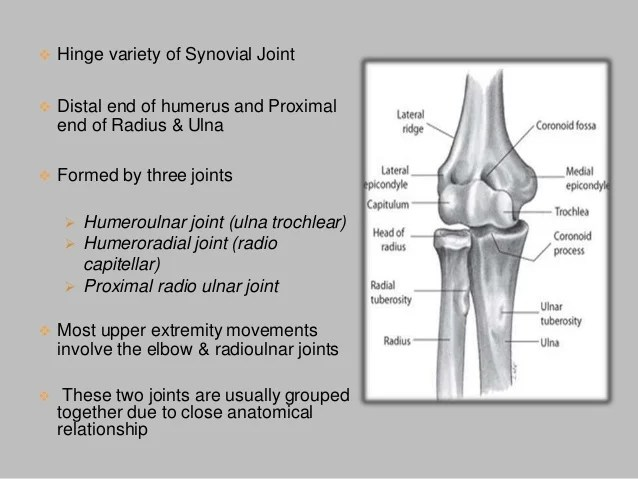 Elbow joint with applied anatomy