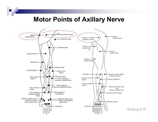 Sreeraj   motor points of axillary nerve also electrical stimulation and application rh slideshare