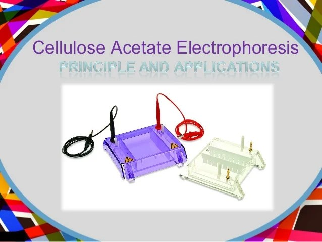 Hb Electrophoresis Machine
