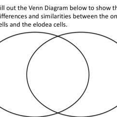 Elodea Leaf Cell Diagram Rheem Ac Unit Wiring Lab 2014 8