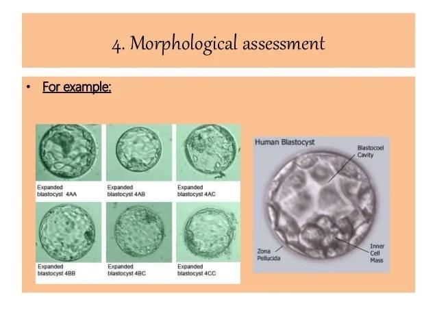 In Vitro embryo life