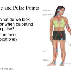 Foot Pulses Diagram Labeled Grasshopper Head Pulse Points - 28 Images Site Peripheral Best Free Home, 1000 ...