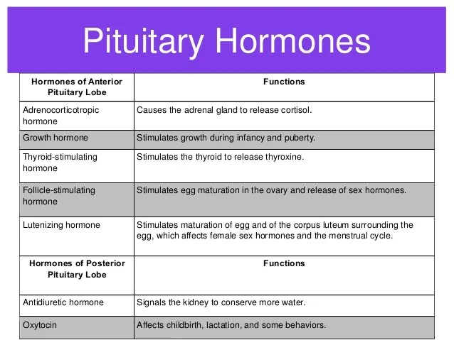 pituitary hormones of anterior lobe functions adrenocorticotropic hormone causes the adrenal gland also endocrine system rh slideshare