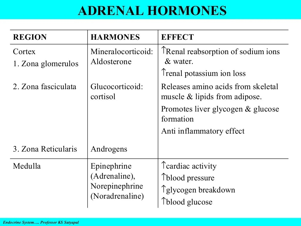 Endocrine System Amp Disorders Gland By Gland