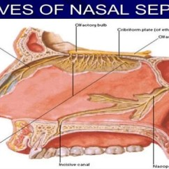 Throat Anatomy Diagram 3 Way Lighting Circuit Wiring And Physiology Of Ear Nose Newer Investigation Nasopharynx 32